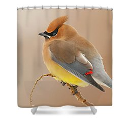 Cedar Wax Wing Shower Curtain by Carl Shaw