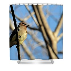 Cedar Wax Wing Shower Curtain by David Arment