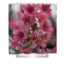 Shower Curtain featuring the photograph Cherry Blossoms by Pamela Walton