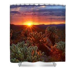 Cholla Sunset  Shower Curtain