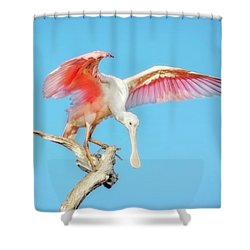 Spoonbill Cleared For Takeoff Shower Curtain
