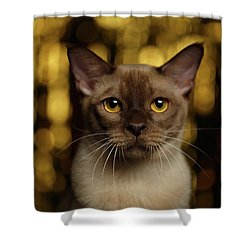Closeup Portrait Burmese Cat On Happy New Year Background Shower Curtain