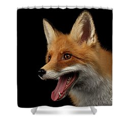 Closeup Portrait Of Smiled Red Fox Isolated On Black  Shower Curtain