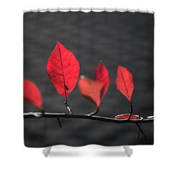 Shower Curtain featuring the photograph Colorful Tree Leaves Changing Color For Auyumn,fall Season In Oc by Jingjits Photography