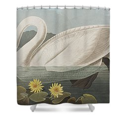 Common American Swan Shower Curtain by John James Audubon
