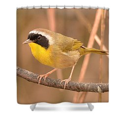 Common Yellow-throat Shower Curtain