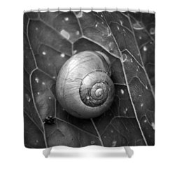 Shower Curtain featuring the photograph Conch by Jouko Lehto