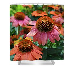 Cone Flower Shower Curtain by Eva Kaufman