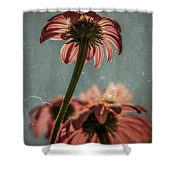 Coneflower Shower Curtain by Garry McMichael