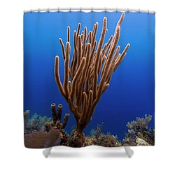 Shower Curtain featuring the photograph Coral  by Rico Besserdich