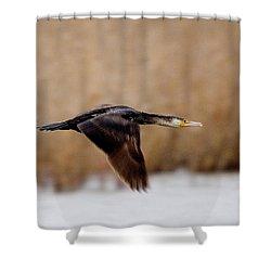 Cormorant In Flight Shower Curtain