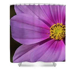 Shower Curtain featuring the photograph Cosmos by Elvira Butler