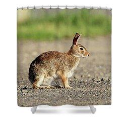 Cottontail Rabbit Stony Brook New York Shower Curtain