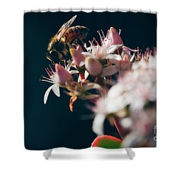 Shower Curtain featuring the photograph Crassula Ovata Flowers And Honey Bee  by Sharon Mau