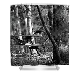 Crow On A Table Shower Curtain by Andy Lawless