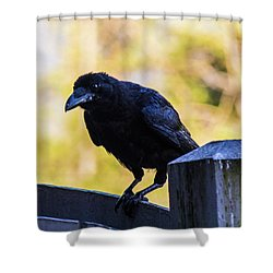 Shower Curtain featuring the photograph Crow Perched by Jonny D