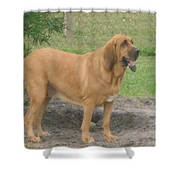 Cujo At The Park Shower Curtain by Val Oconnor