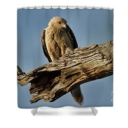 Shower Curtain featuring the photograph Curious by Douglas Barnard