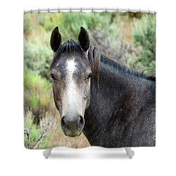 Curious Shower Curtain by Michele Penner