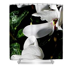 Shower Curtain featuring the photograph Cyclamen by Mindy Newman
