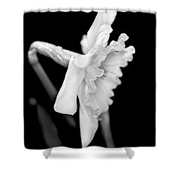 Shower Curtain featuring the photograph Daffodil Flower Black And White by Jennie Marie Schell