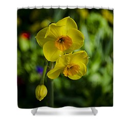 Daffodils Shower Curtain by Dan Hefle
