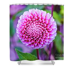 Shower Curtain featuring the photograph Dahlia by Zaira Dzhaubaeva