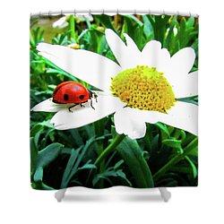Daisy Flower And Ladybug Shower Curtain by Cesar Vieira