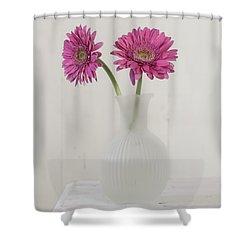 Shower Curtain featuring the photograph Gerbera Daisy Love by Kim Hojnacki