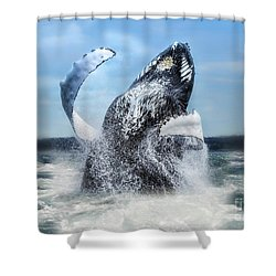 Dances With Whales Shower Curtain by Nancy Dempsey