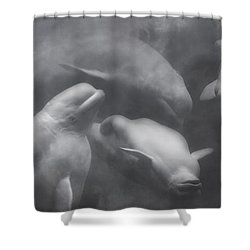 Dancing Belugas  Shower Curtain