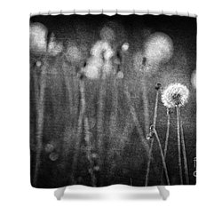 Dandelion Field Shower Curtain