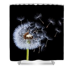 Shower Curtain featuring the photograph Dandelion On Black Background by Bess Hamiti