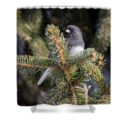 Shower Curtain featuring the photograph Dark-eyed Junco by Ricky L Jones
