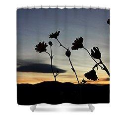 Death Valley Superbloom 104 Shower Curtain