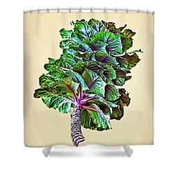 Shower Curtain featuring the photograph Decorative Cabbage by Walt Foegelle