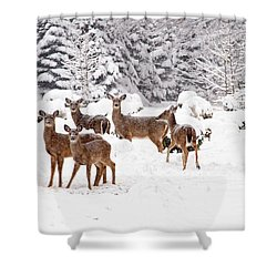 Shower Curtain featuring the photograph Deer In The Snow by Angel Cher
