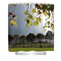 Denbies Vineyard Surrey Uk Shower Curtain