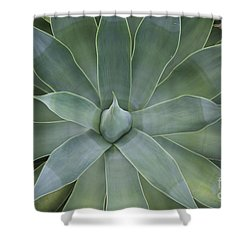 Detail Of An Agave Attenuata Shower Curtain