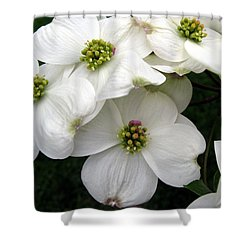 Dogwood Branch Shower Curtain