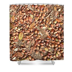 Donguri Means Acorn  Shower Curtain