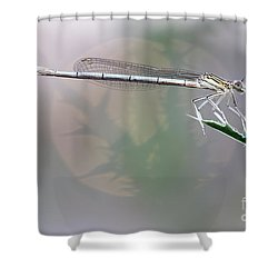 Dragonfly On Leaf Shower Curtain by Michal Boubin