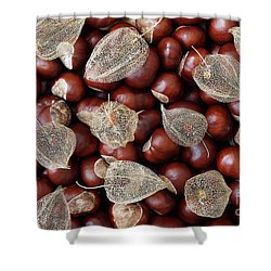 Dried Fruits Of The Cape Gooseberry And Chestnuts Shower Curtain