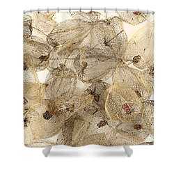 Dried Fruits Of The Cape Gooseberry Shower Curtain by Michal Boubin