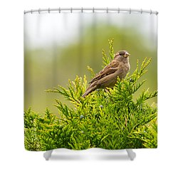 Dunnok Shower Curtain