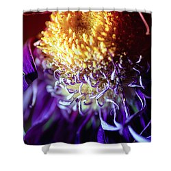 Dying Purple Chrysanthemum Flower Background Shower Curtain