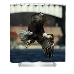 Shower Curtain featuring the photograph Eagle Flight by Coby Cooper