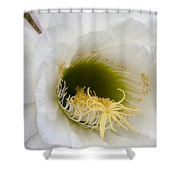 Shower Curtain featuring the photograph Easter Lily Cactus by Phyllis Denton
