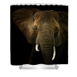 Elephant Against Black Background Shower Curtain