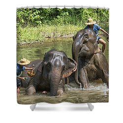 Elephant Bath Shower Curtain by Wade Aiken